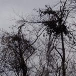 ツキノワグマのクマ棚