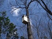 フクロウ巣箱設置