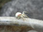 クモ類調査
